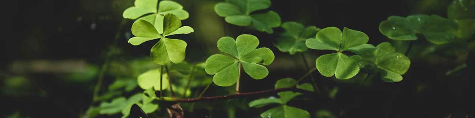 superstitii noroc din România