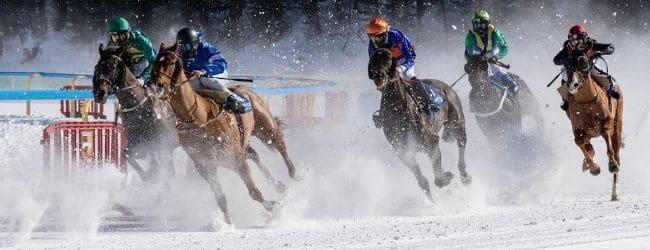 winamsters pariuri sportive curse cai