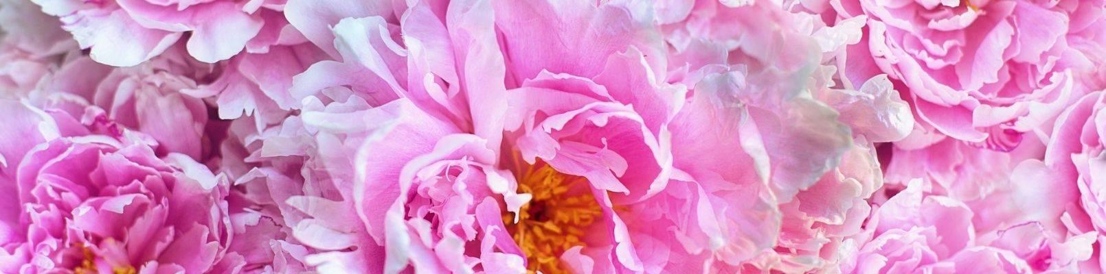 horoscop floral bujori