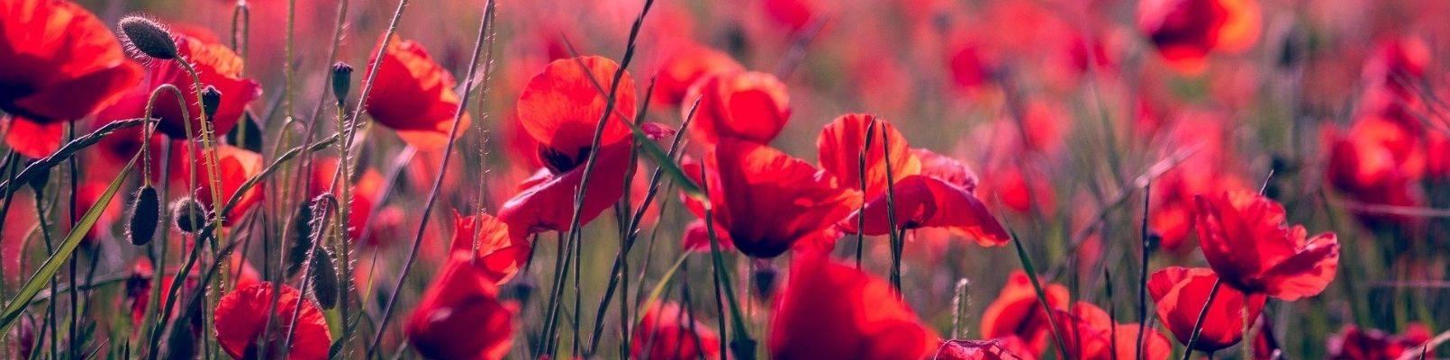 horoscop floral maci
