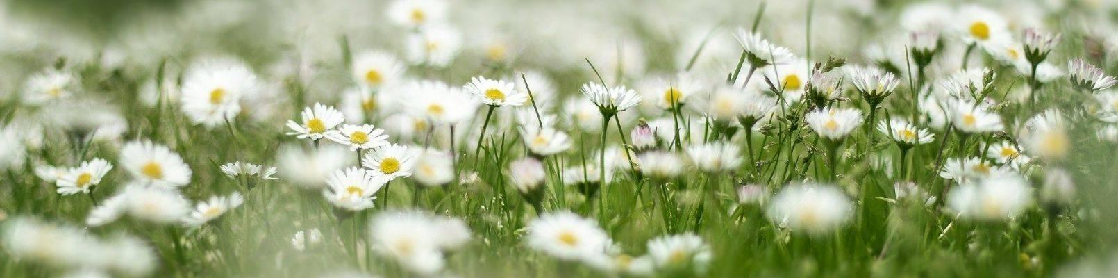horoscop floral margareta