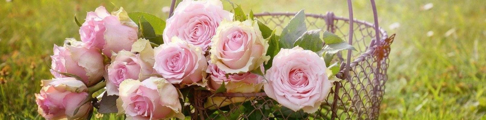 horoscop floral trandafiri