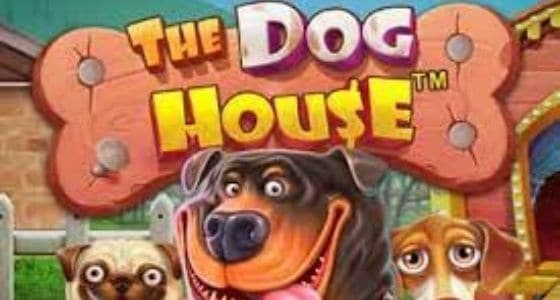 dog house slot pragmatic play